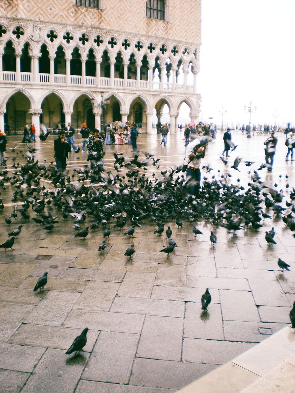 Throwback to the great massacre in Venice. Travel Destinations Travel Wanderlust My Year My View EyeEm Best Shots EyeEm Italy Italia Venice, Italy Pentax Architecture Birds