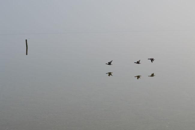 Spiegelgladde Waddenzee Vogels Boven Waddenzee Waddenzee Vanaf Vlieland