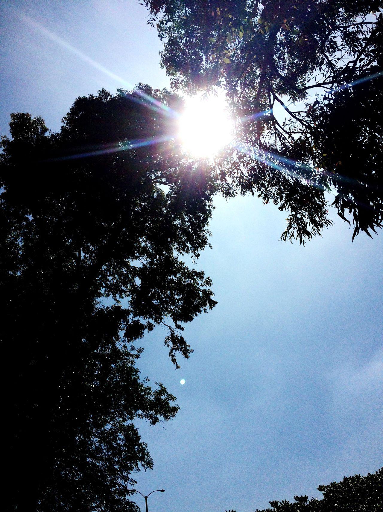 Tree Sun Sunbeam Lens Flare Sky Nature Beauty In Nature Outdoors Sunlight Day