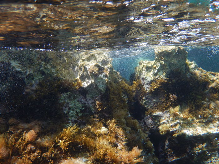 Animal Themes Animals In The Wild Beauty In Nature Close-up Day Nature No People Outdoors Sea Sea Life Swimming UnderSea Underwater Underwater Landscape Water