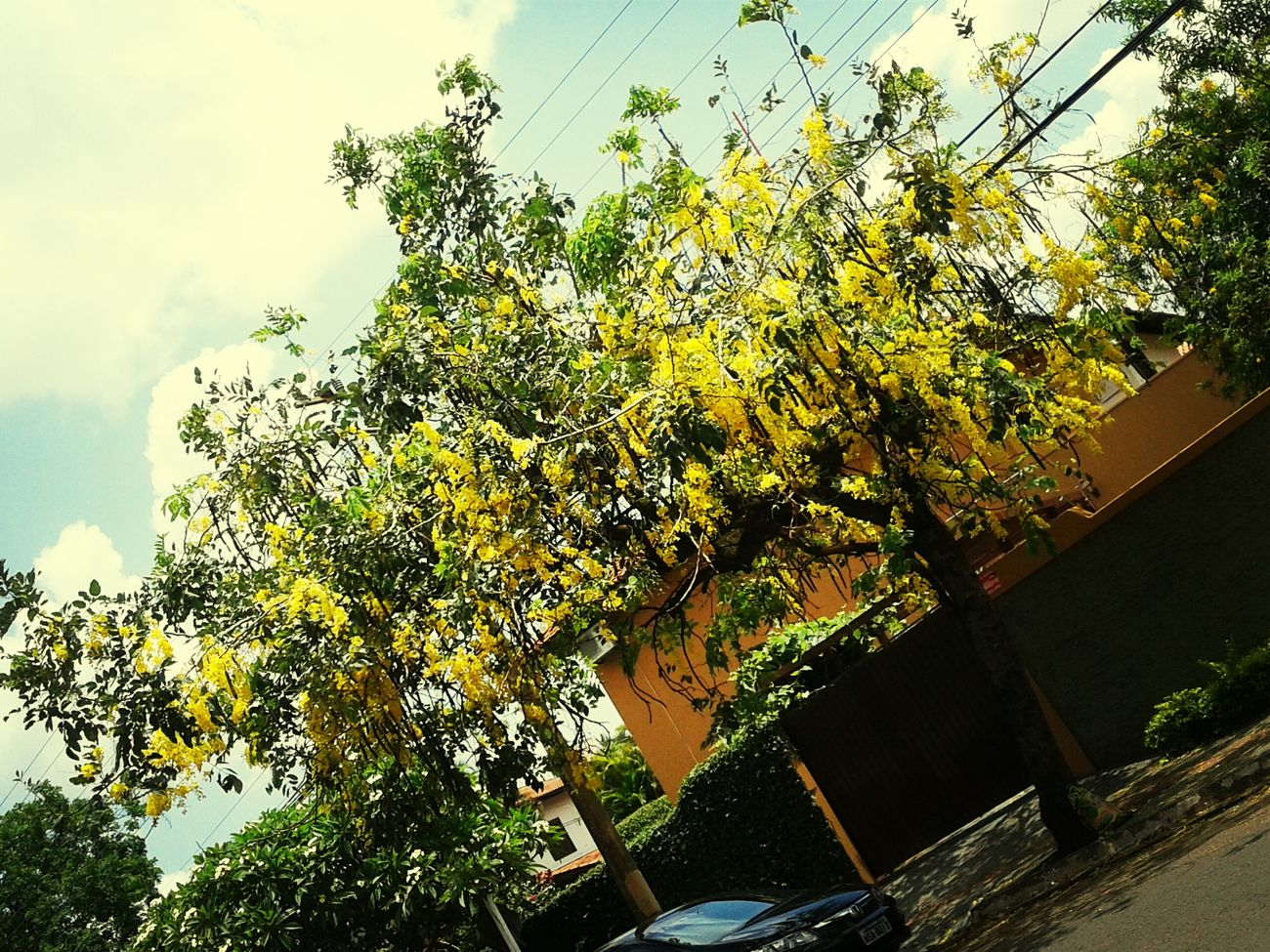 Yellowday beautiful clicnikkon job Maroli Walking Around