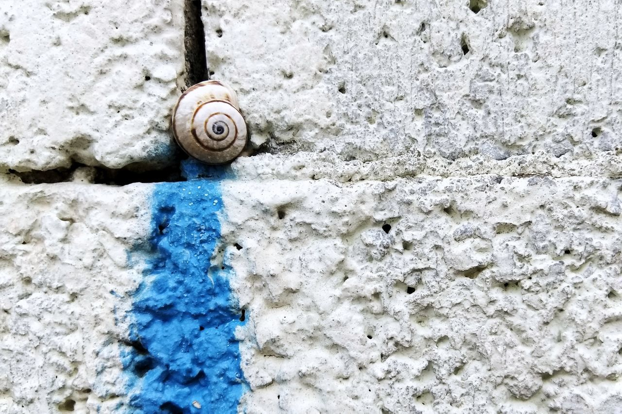 Snail Gastropod Day Outdoors No People One Animal Animal Themes Close-up Animals In The Wild Nature Fragility Abstract Photography Background Texture Background Wall Wall - Building Feature Surfaces Grunge Surfaces And Textures Textures And Surfaces Nature Backgrounds High Angle View Fibonacci Spiral