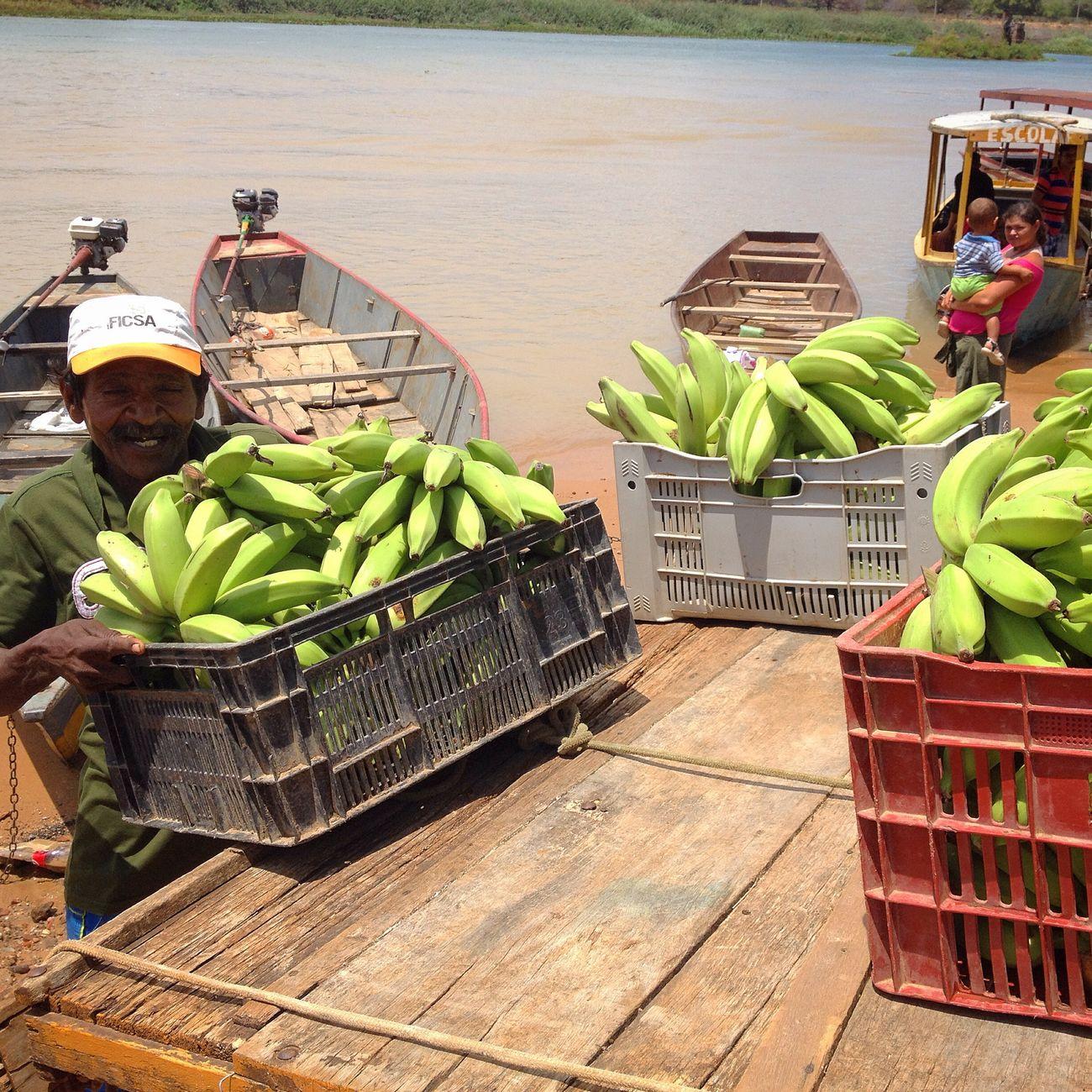 The Rio Sao Francisco small farmers banana. People who works to feed us! Brazil Pernambuco