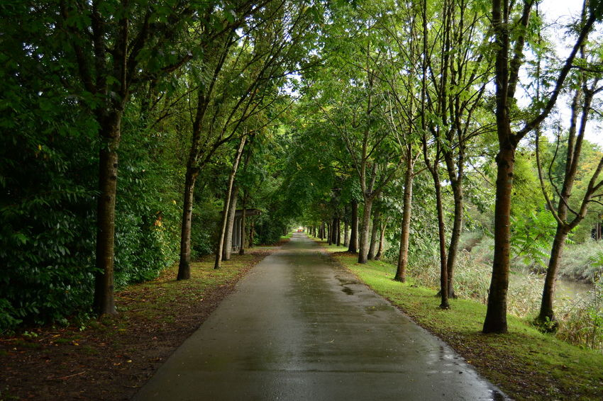 Tree The Way Forward Green Color Nature Outdoors Forest Day No People Road Tranquility Beauty In Nature Scenics Water Sky Trees árbol Arboles Paseo
