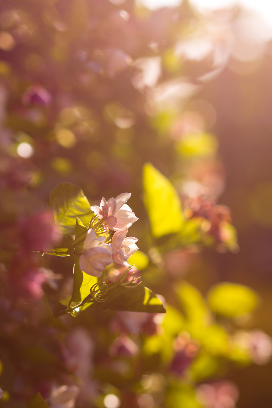 Beautiful Beauty In Nature Day Delicate Flower Fragility Freshness Growth Leaves Nature Outdoors Petal Pink Plant
