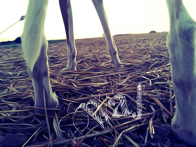 Folge deinem Weg egal wo er hinführt Tier Tierfotografie Beautiful Pets Animals Hund Hunde Hundeliebe Animal Photography Hunderunde Hunde Liebe ♡ Hundefotografie One Animal Animal Photography Animal Themes Dogs Nachdenklich Street Roadway Time Way Yourway Sketch Art