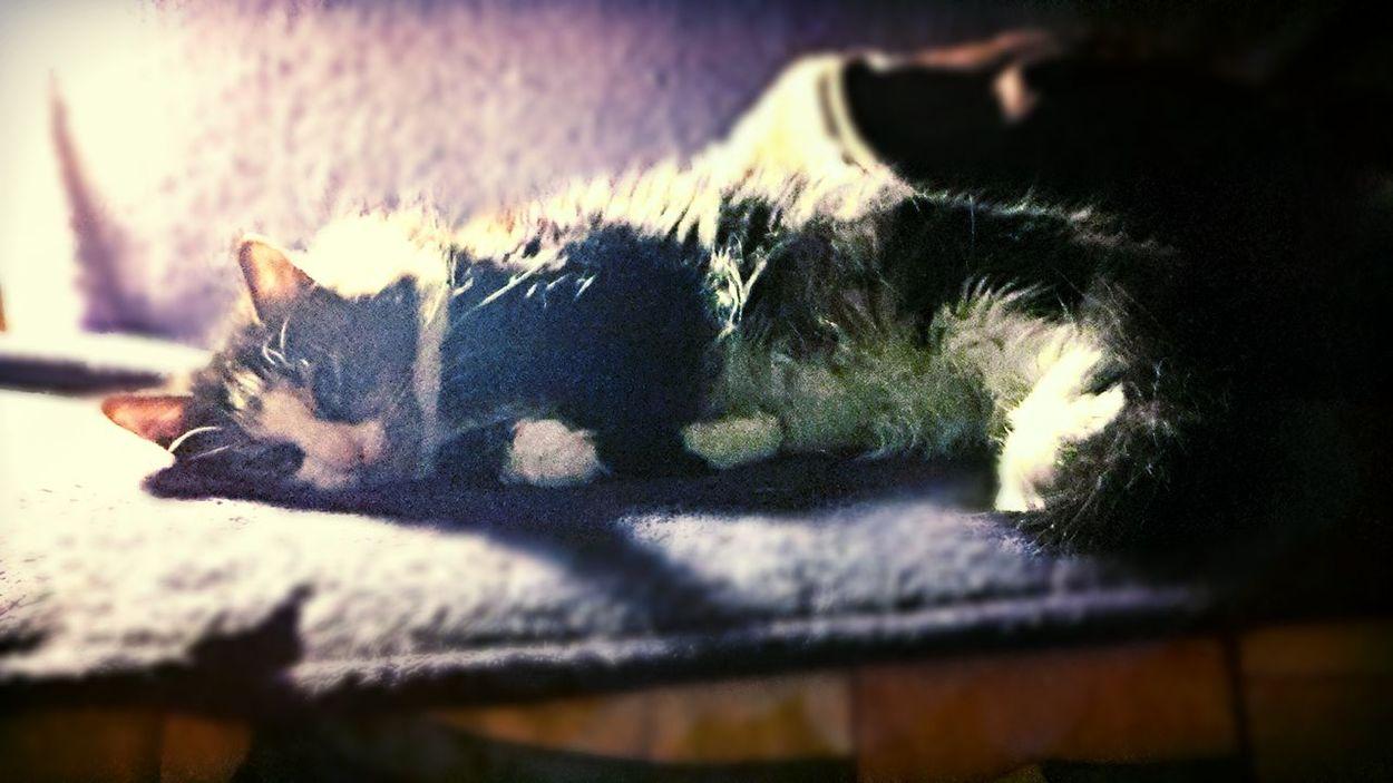 good night Cat Kitty Cat Sleapy Enjoying Life