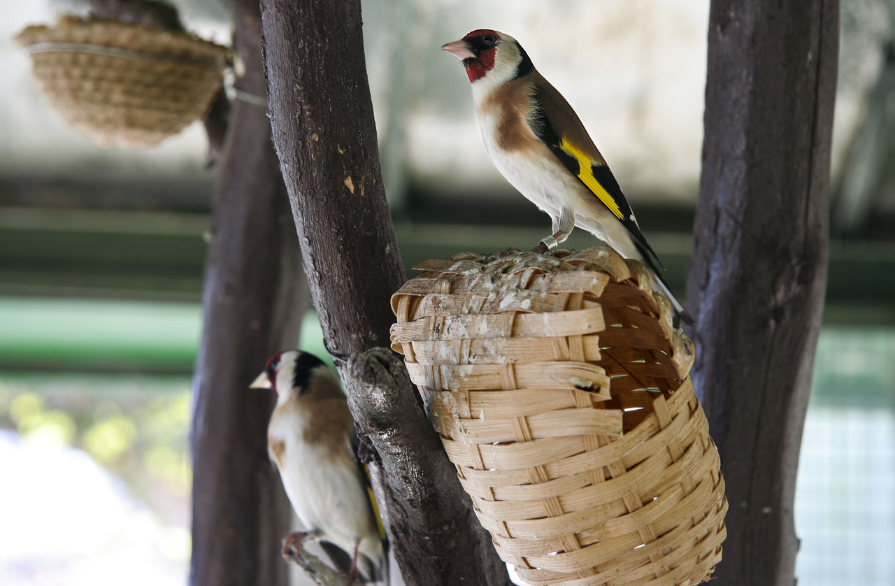 animal themes, animals in the wild, bird, animal wildlife, one animal, focus on foreground, perching, tree trunk, no people, woodpecker, day, nature, outdoors, close-up, tree, beauty in nature