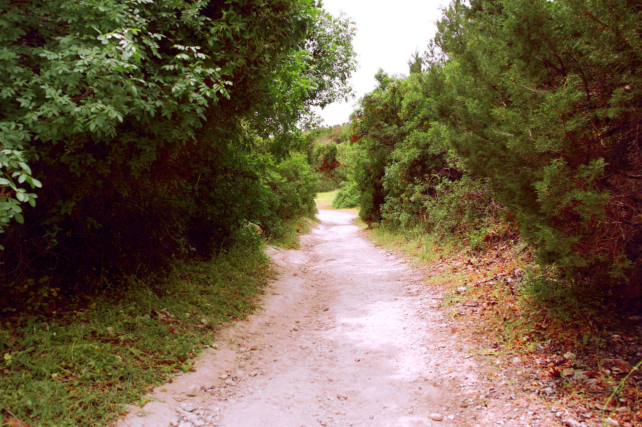 Akamas Avakas Canyon Beauty In Nature Cyprus Day Forest Grass Growth Nature No People Outdoors Plant Road The Way Forward Tranquil Scene Tranquility Tree Chemistart