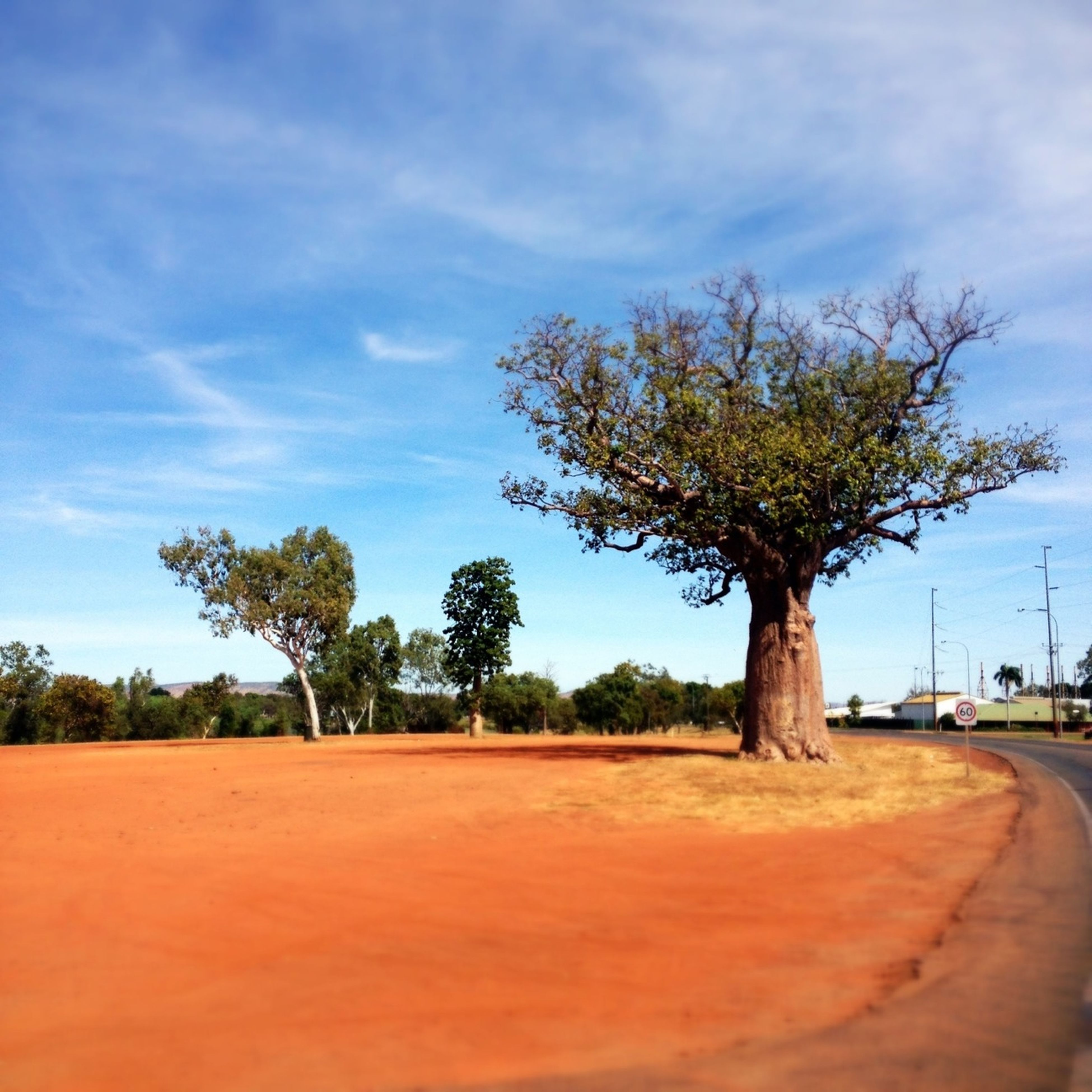 tree, sky, tranquility, tranquil scene, nature, scenics, landscape, cloud - sky, cloud, tree trunk, beauty in nature, growth, palm tree, bare tree, road, branch, solitude, day, outdoors, non-urban scene