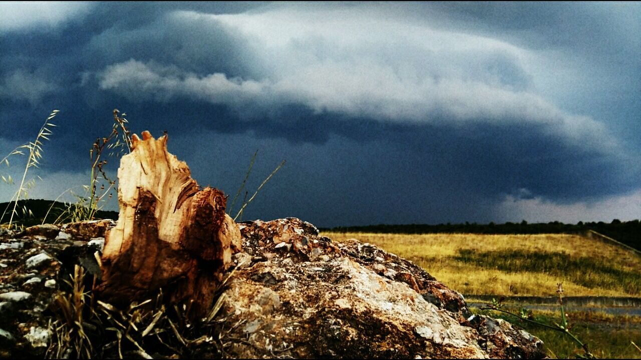 nature, sky, cloud - sky, no people, tranquility, outdoors, day, scenics, beauty in nature, landscape, plant, dead tree, grass, close-up