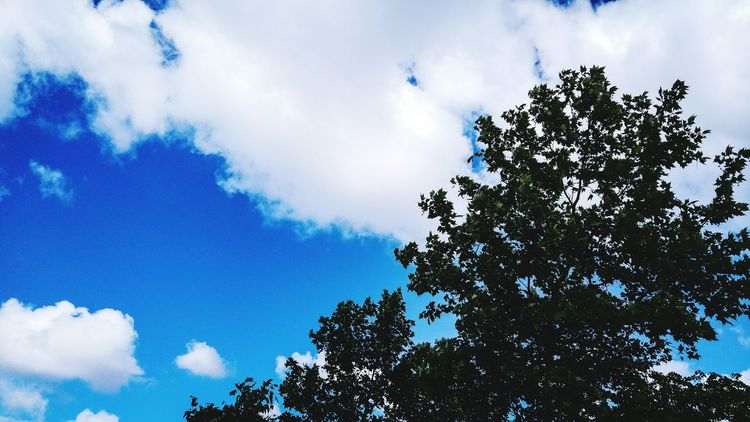 09.10.2016 🙏 Tree Low Angle View Sky Blue Growth Cloud Cloud - Sky High Section Nature Scenics Beauty In Nature Day Branch Tranquility Tranquil Scene Outdoors Outline Treetop Cloudy No People