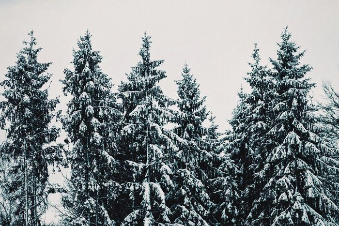 Snow Check This Out Taking Photos Trees White Winter Wintertime Hagen Snowing Blizzard Winterwonderland Snow ❄