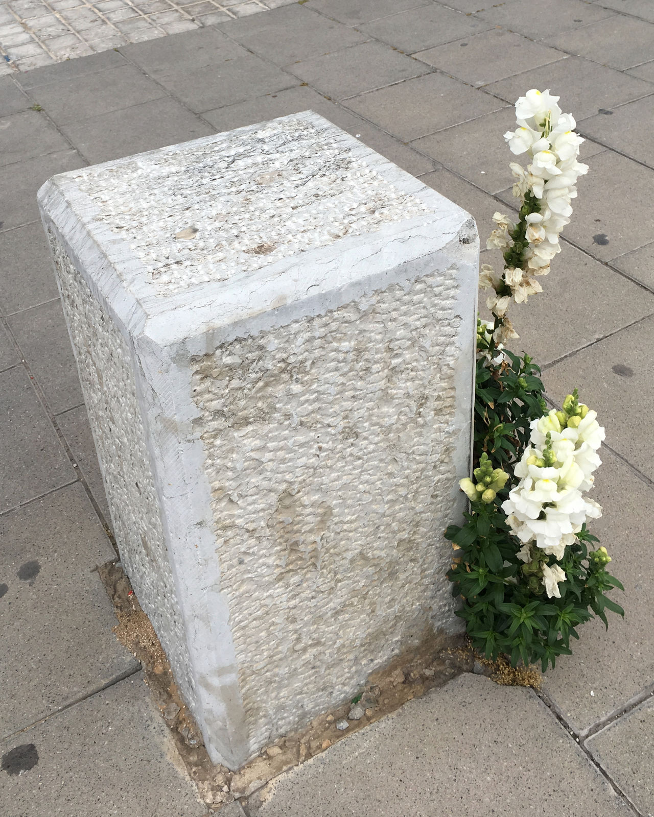 Bollard Concrete Flower Pavement Sidewalk Slab Weed