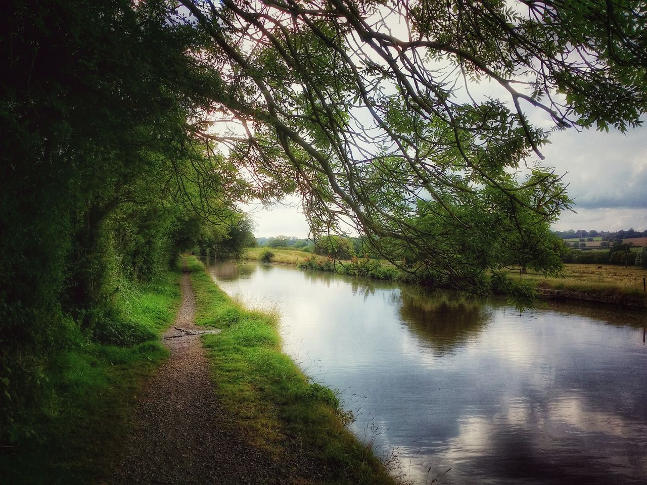 tree, nature, tranquil scene, tranquility, beauty in nature, day, scenics, water, grass, outdoors, no people, the way forward, landscape, lake, sky, growth