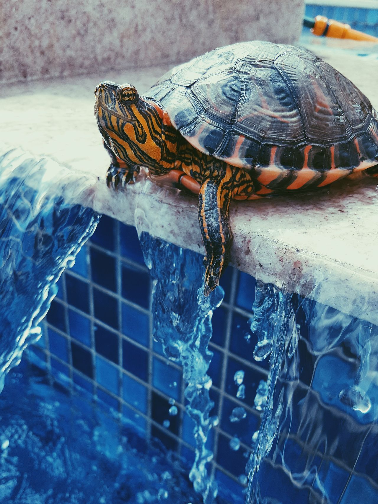 Reptile & Colors Animal Themes One Animal Water Reptile No People Nature Animal Wildlife Close-up Day Outdoors Sea Turtle Tortoise Shell First Eyeem Photo Animals In The Wild Sea Life Mammal