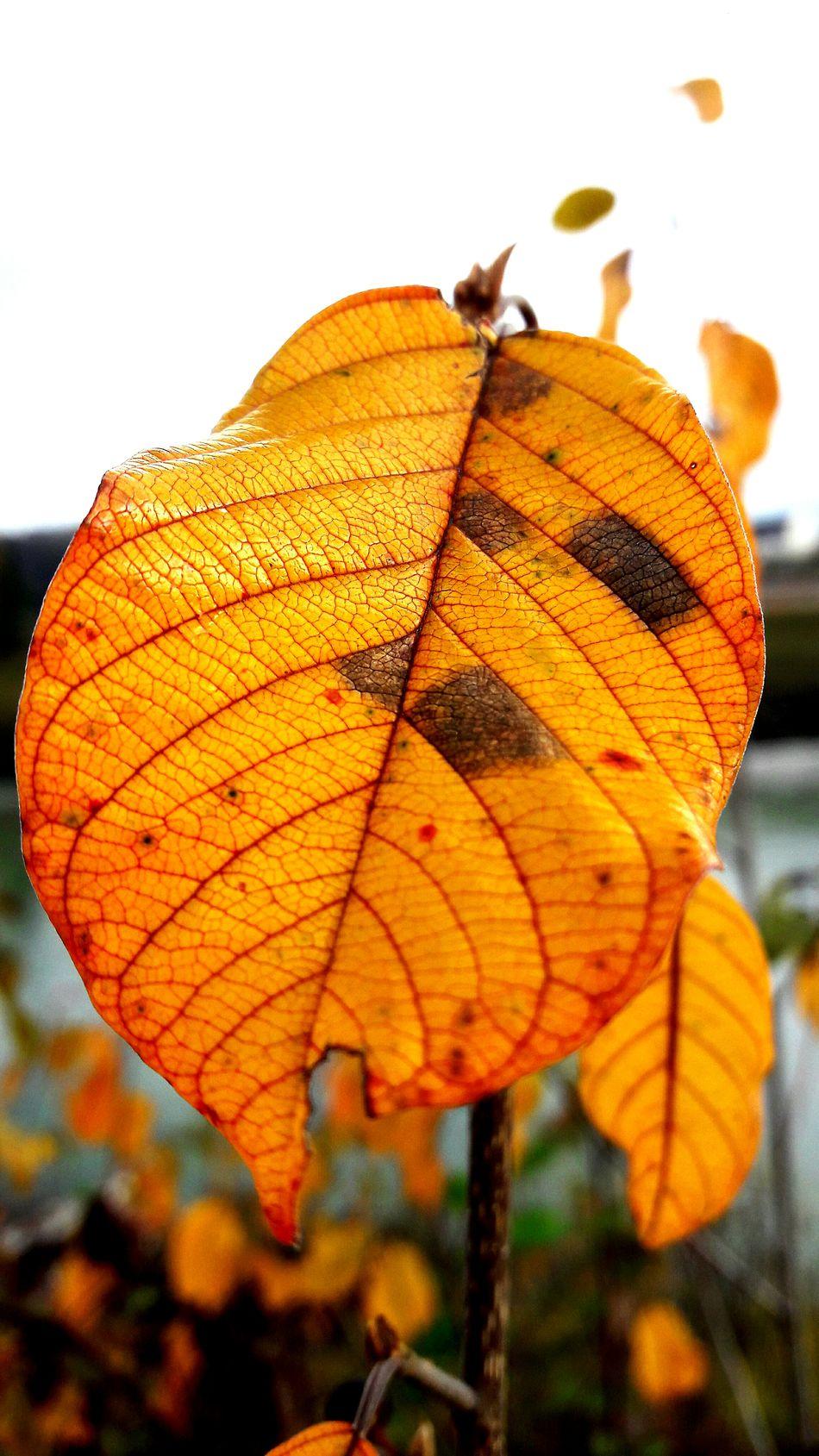 Herbst2016 Natur Beauti In Natur Gelb Orang
