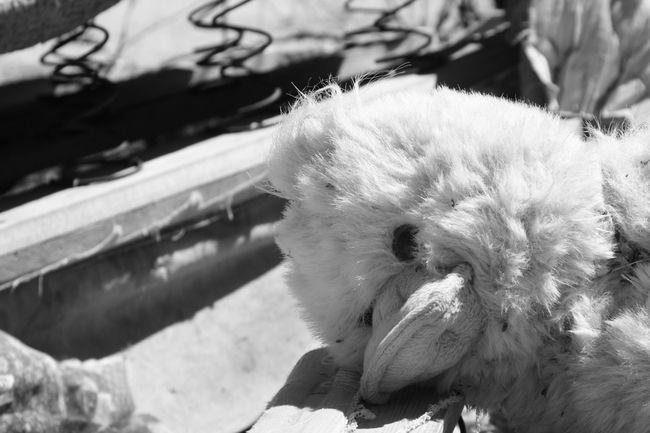 Forgotten. Abandon_seekers Abandoned Abandoned & Derelict Boxsprings Broken Child Dirt Dirty Duck Roadtrip Stuffed Animals Stuffed Toy Trash Trash Is Treasured