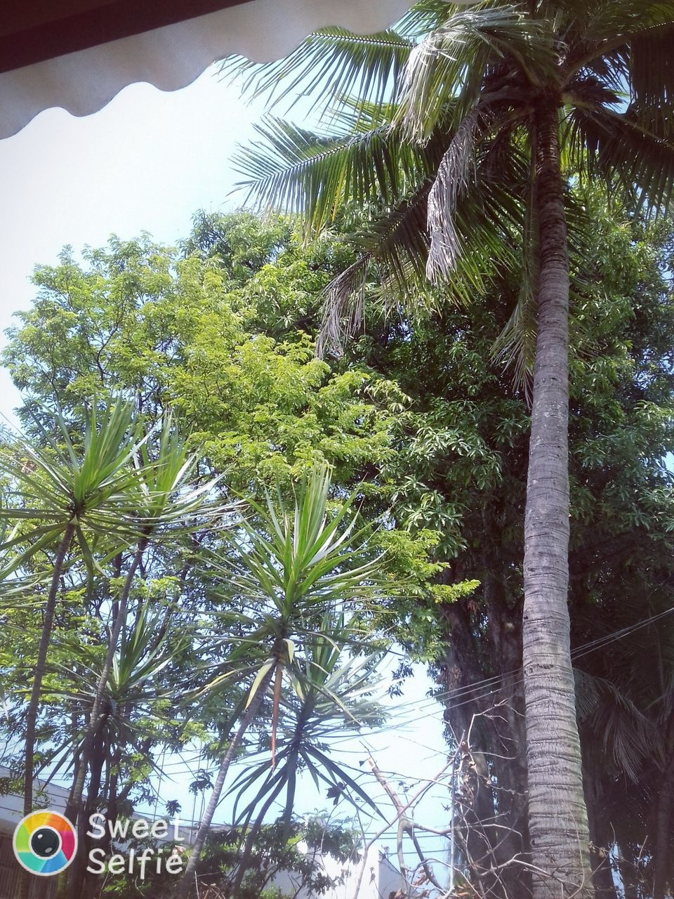 palm tree, tree, day, growth, nature, low angle view, outdoors, no people, tree trunk, beauty in nature, close-up, sky