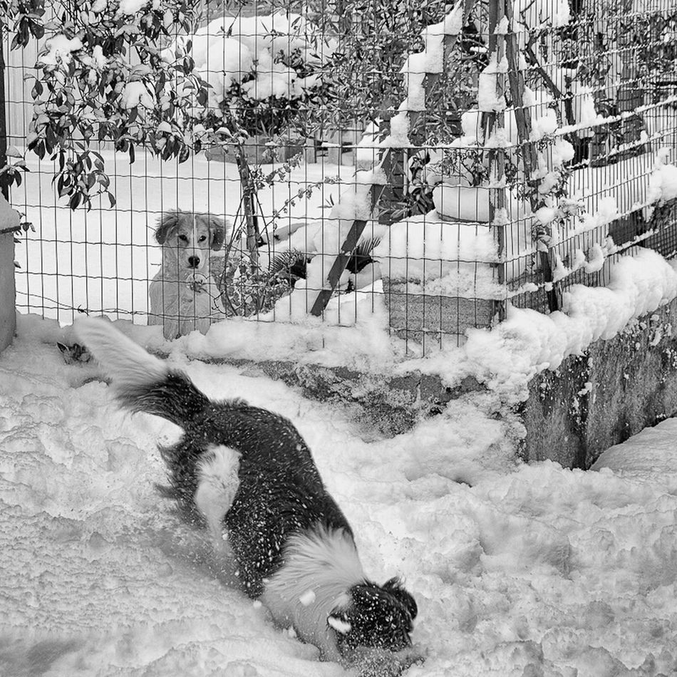 Snow & Dogs ! Friends Dog Black And White Taking Photos Snow Eye4photography  Hanging Out