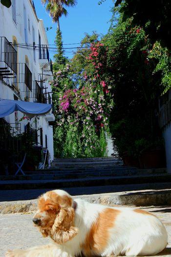 Dogslife One Animal Dog Portrait City Ibiza