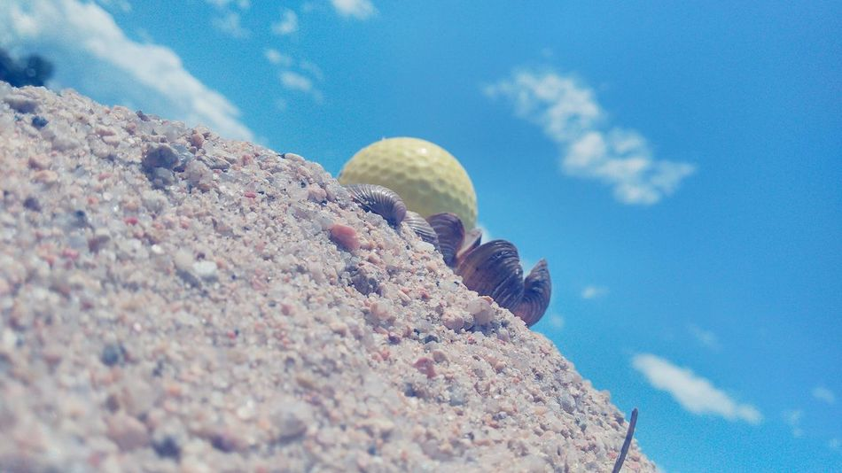 Golf Golf Ball Sea Shells Sky_collection Beach Photography Beach Taking Photos Adapted To The City