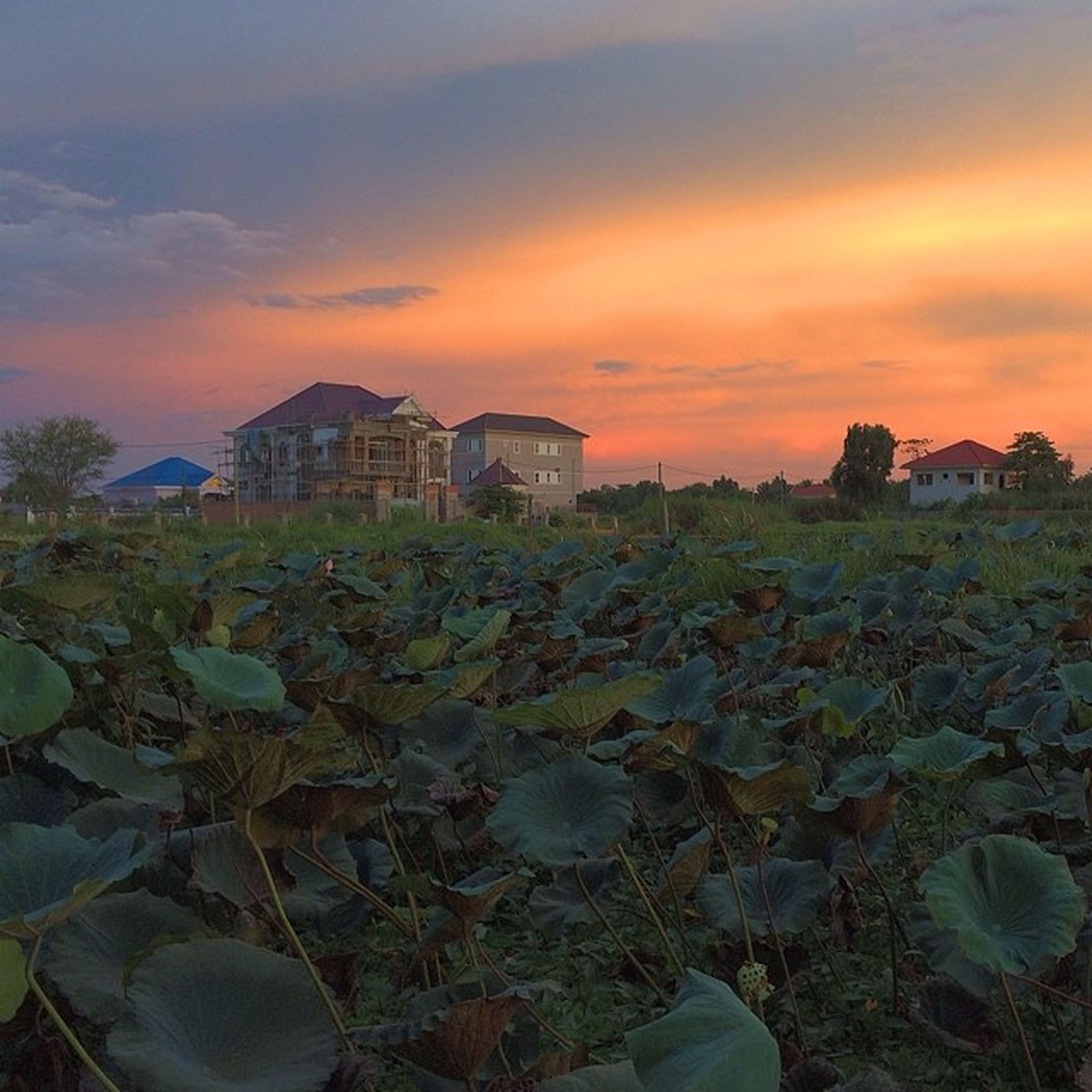 Vscocam Snail Lake Kiensvay lotus cambodia