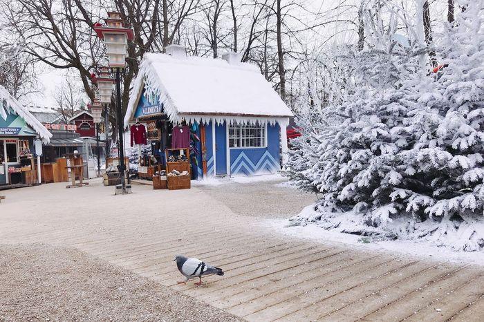Winter Cold Temperature Building Exterior Snow Animal Themes One Animal Tree