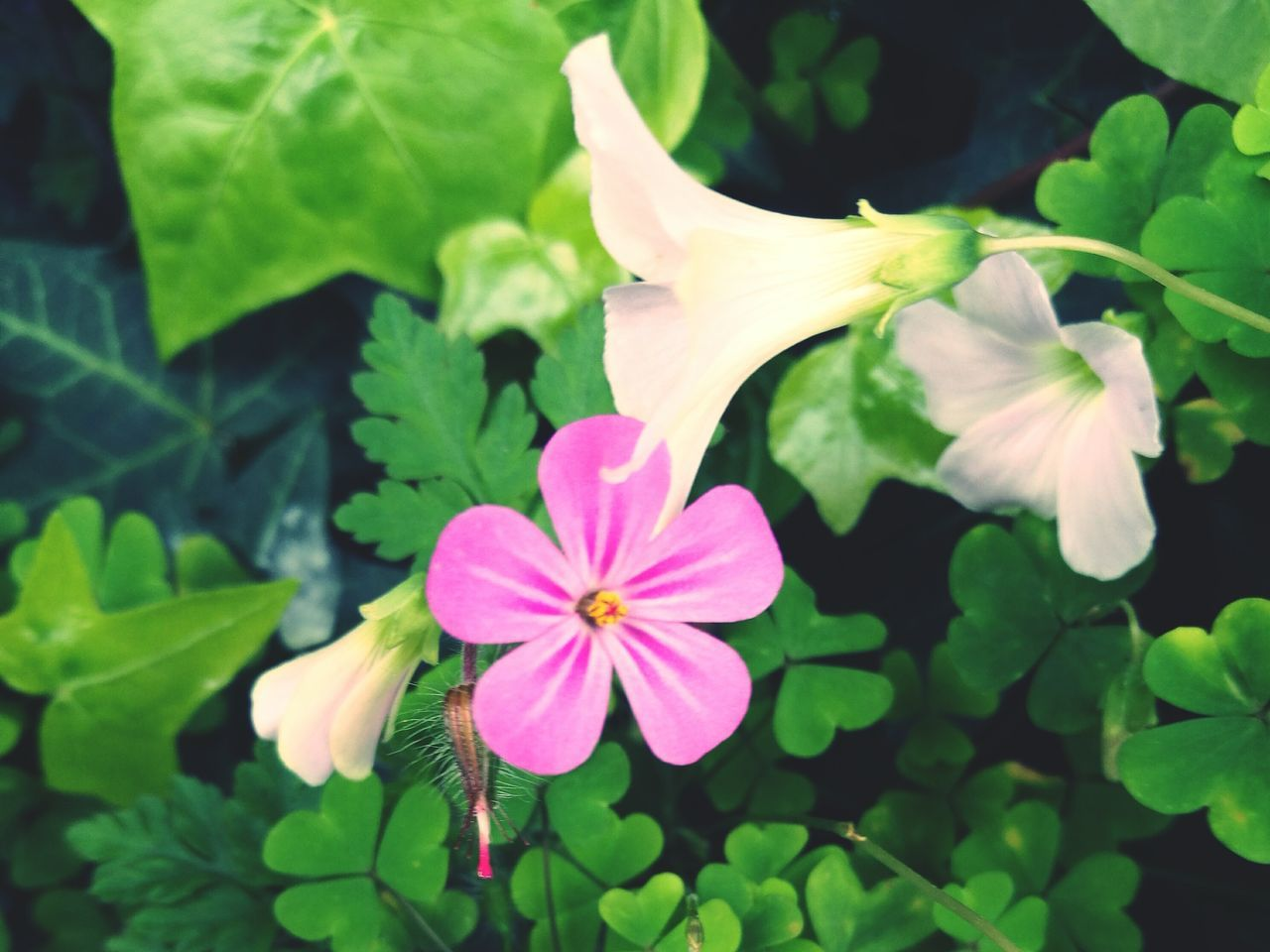 Flower Freshness Fragility Beauty In Nature Nature Petal Growth Purple Leaf Flower Head Plant Blooming No People Day Green Color Outdoors Pink Color Close-up