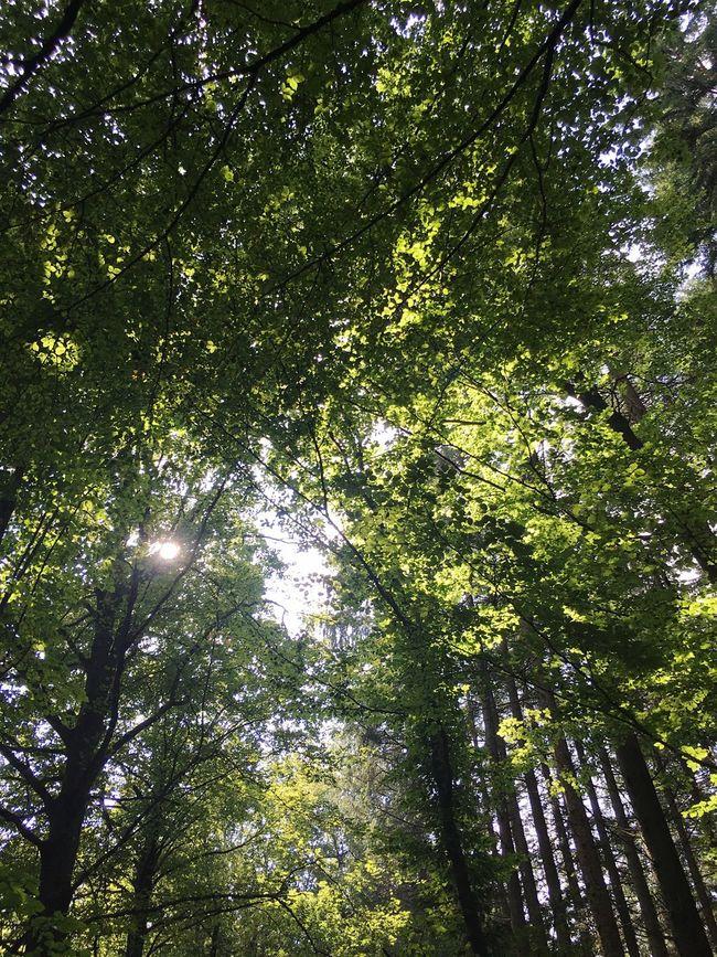 Forest Roof Forest Bavarian Forest Bavaria