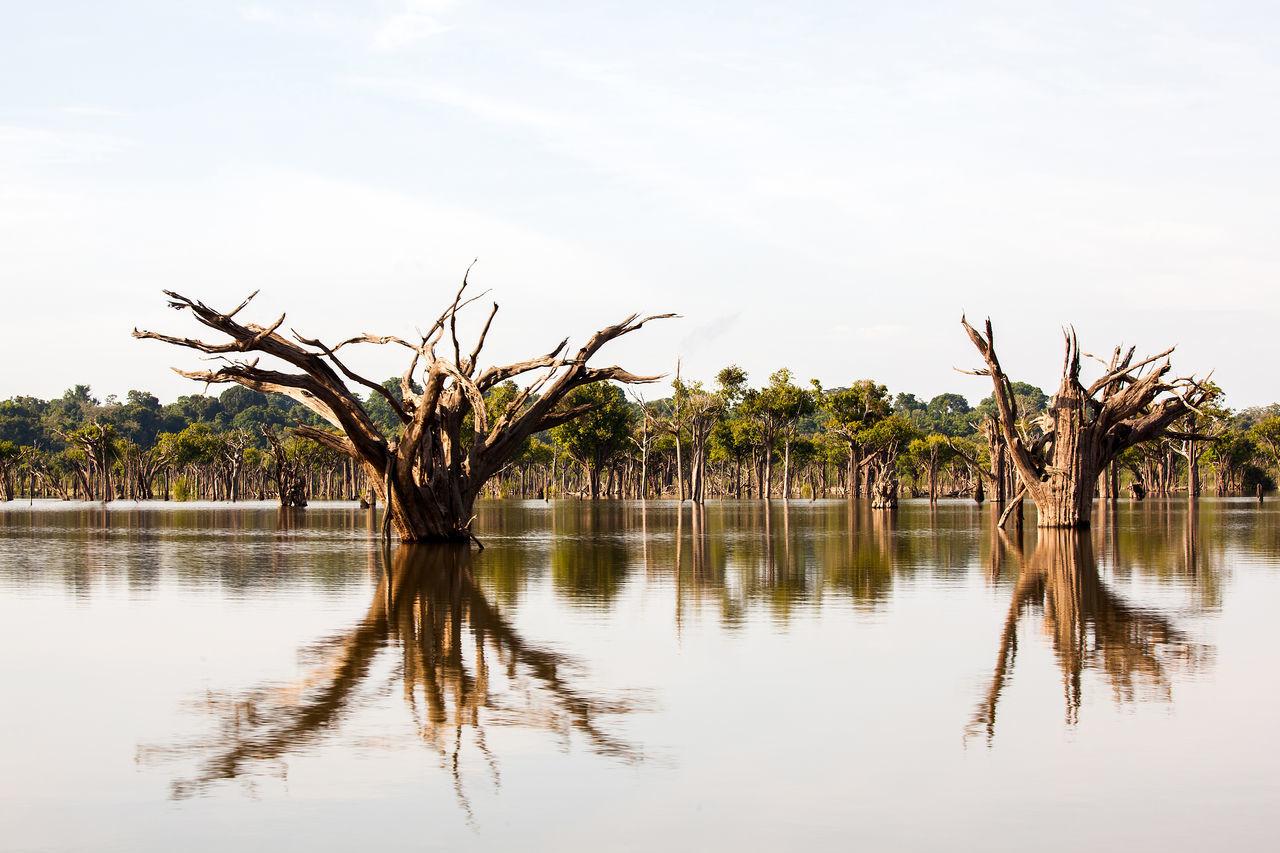 Amazon River Amazonas Brazil Exploring Extreme Indian Reflection Tranquility Travel Tree Waterscape Adventure Amazon Boat Brazilian Culture Fishing Forest Igapó Igarapé Rainforest Reflections In The Water River Travel Destinations Water