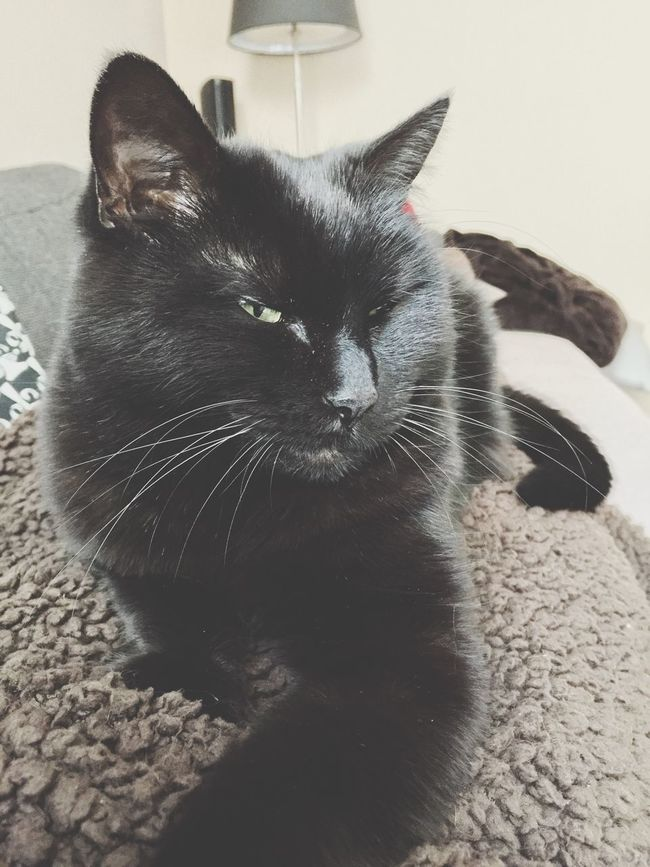 My Nuckie mouse 😻😽💟, Black Cat Black Cat Photography Black Cats Lovers Black Cats Black Cats Are Beautiful Black Cat Love , Schwarze Katze Schwarzekatze , Chat Noir Chats Noir , Gatto Nero Gatti Neri