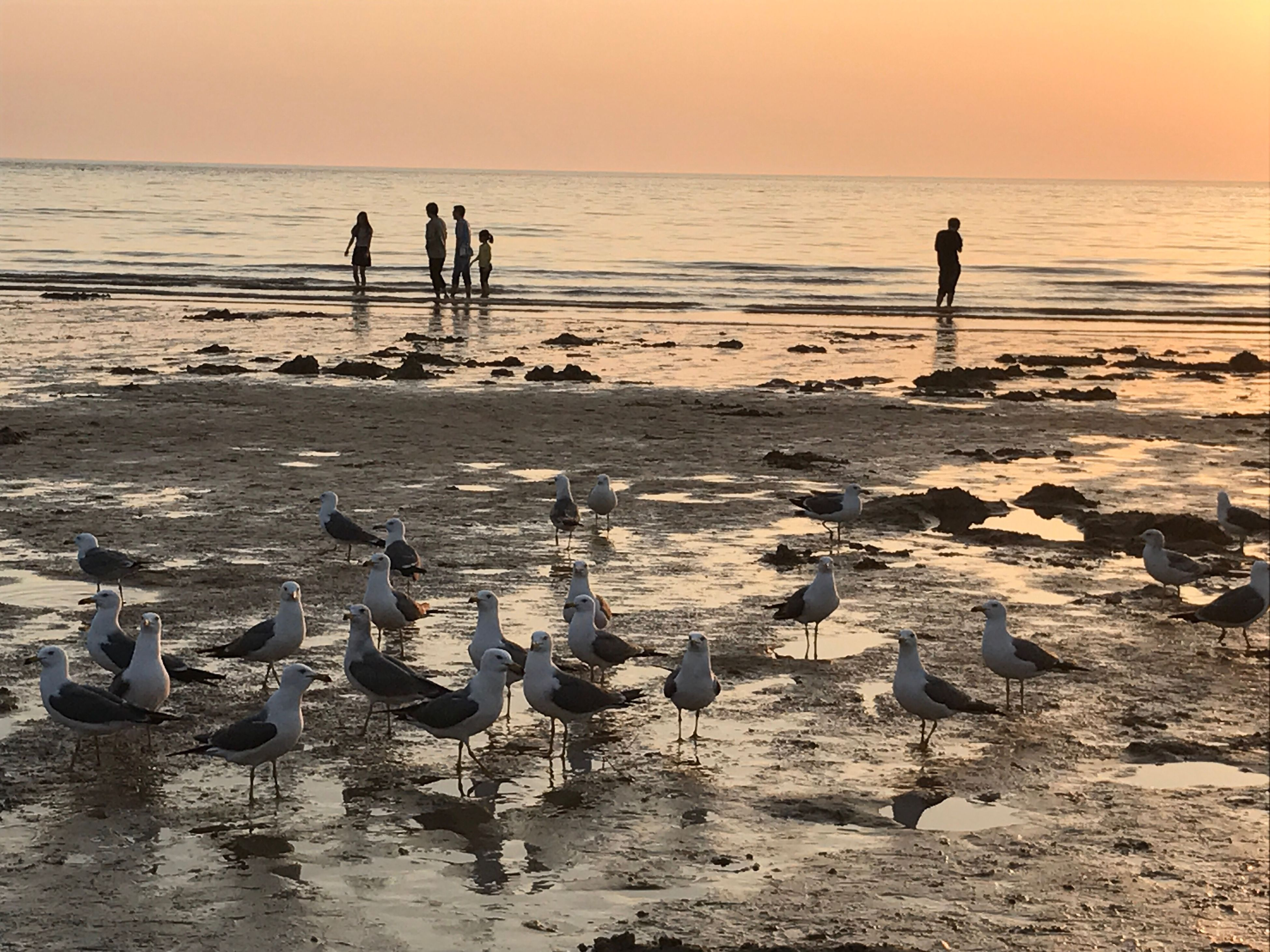 water, sunset, nature, beach, beauty in nature, sea, bird, animals in the wild, large group of animals, animal themes, scenics, horizon over water, sand, tranquility, silhouette, outdoors, sky, animal wildlife, standing, no people, day