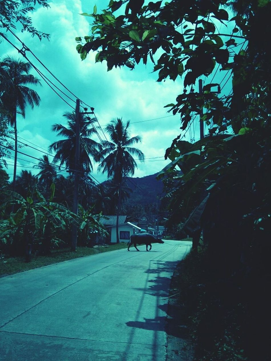 Streetlife Kus In Thailand
