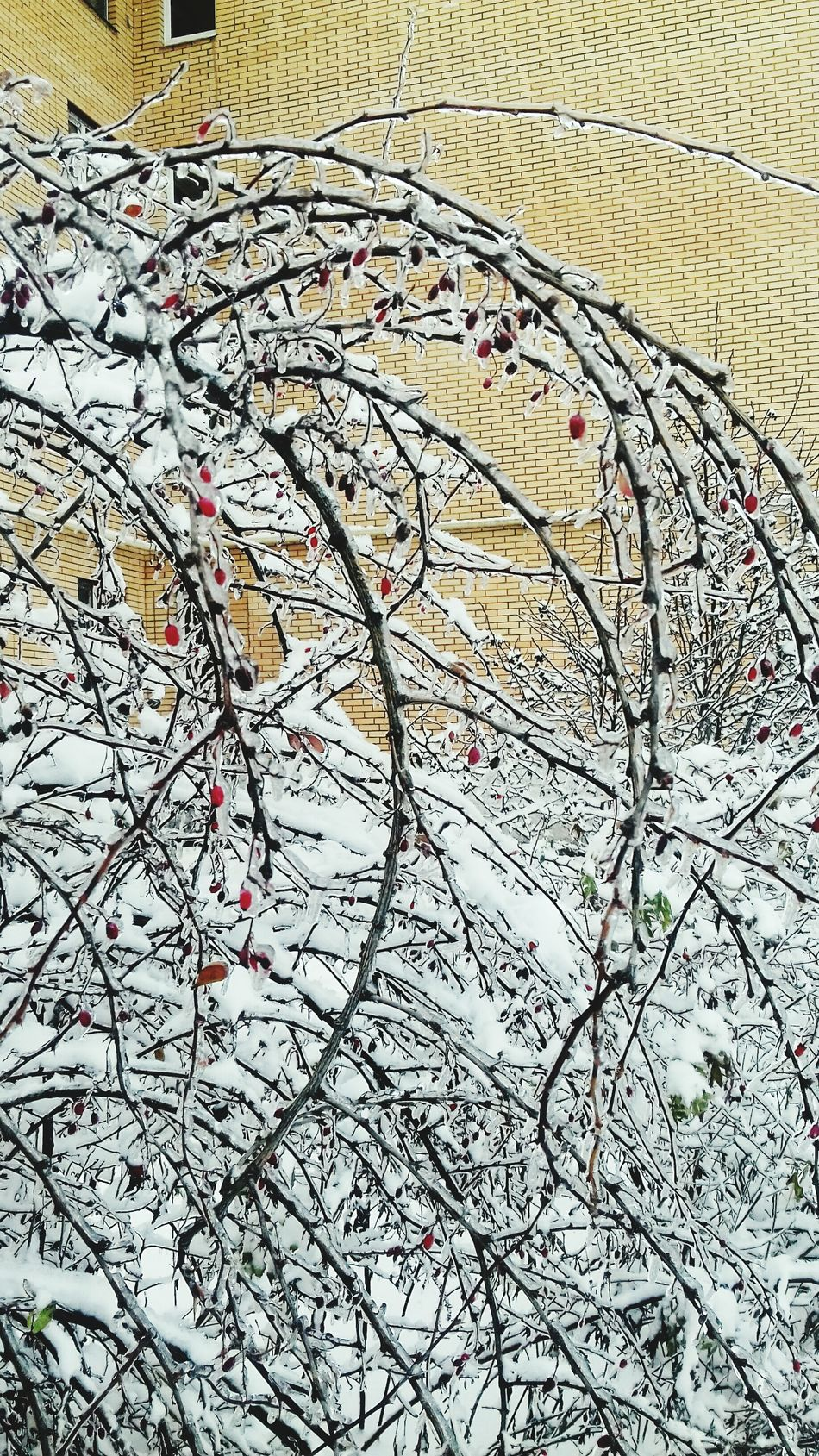 Рання осень в Москве No People Full Frame Outdoors Close-up Backgrounds Day Nature