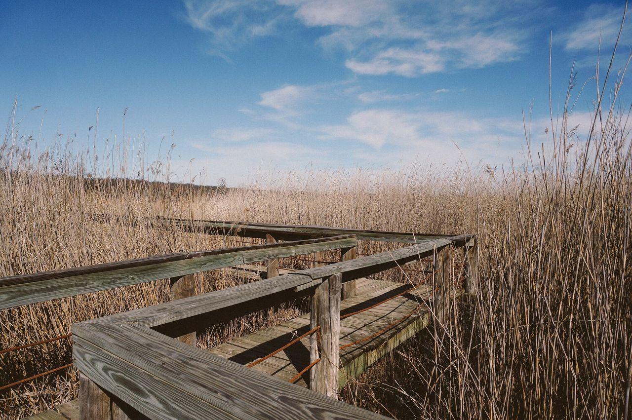 Wooden Boardwalk On Grassy Field