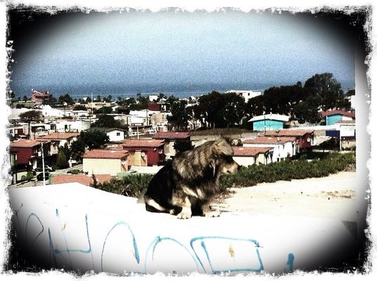 dog at Playas De Tijuana by lobobobo