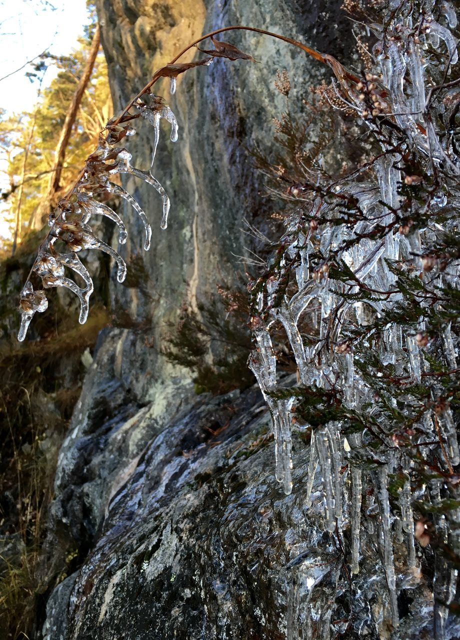 cold temperature, ice, tree, frozen, nature, winter, beauty in nature, icicle, no people, snow, tranquility, day, low angle view, tree trunk, outdoors, branch, scenics, water, close-up