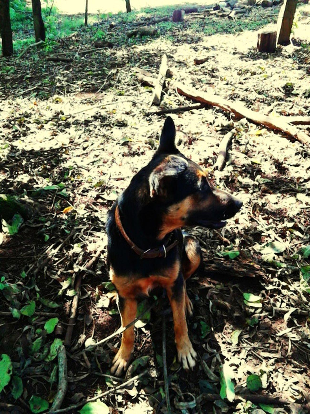 My Dog My Lovely