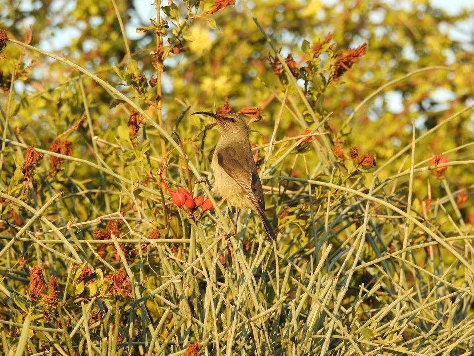 Africa Africa Wildlife Animal Wildlife Animals In The Wild Beauty In Nature Bird Bird Photography Close-up Nature Nature One Animal Perching Tree