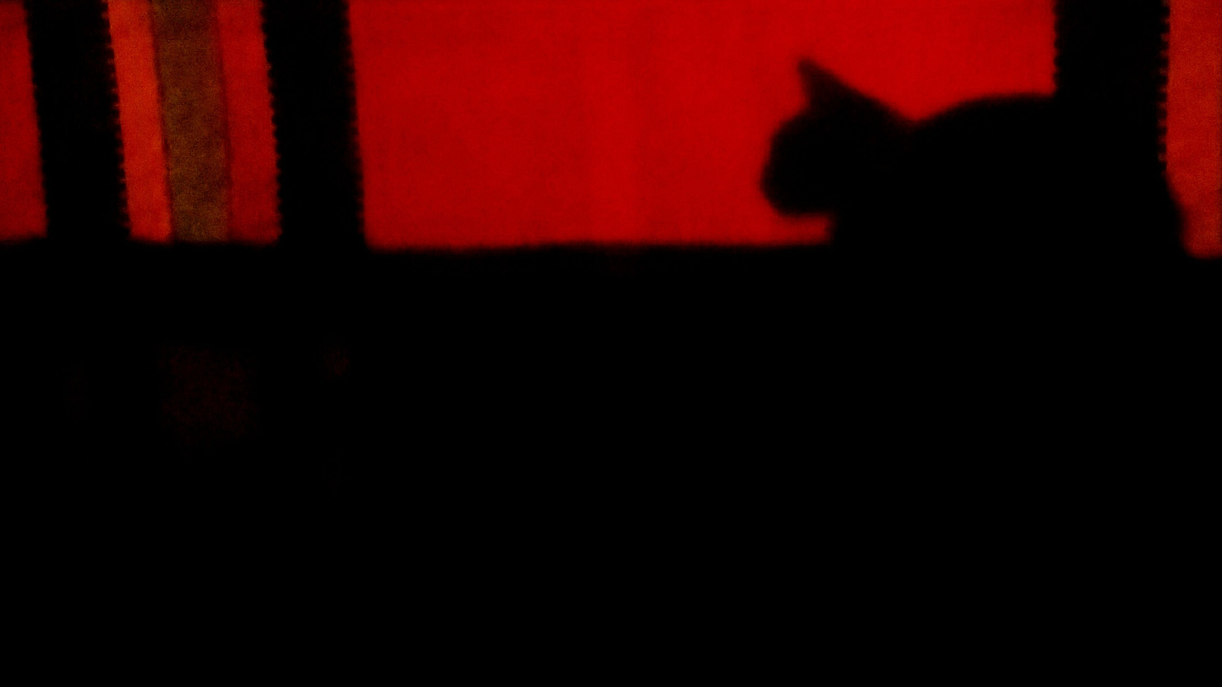 indoors, red, silhouette, dark, orange color, copy space, unrecognizable person, side view, home interior, pets, relaxation, domestic animals, sunset, sitting, standing, men, shadow, rear view
