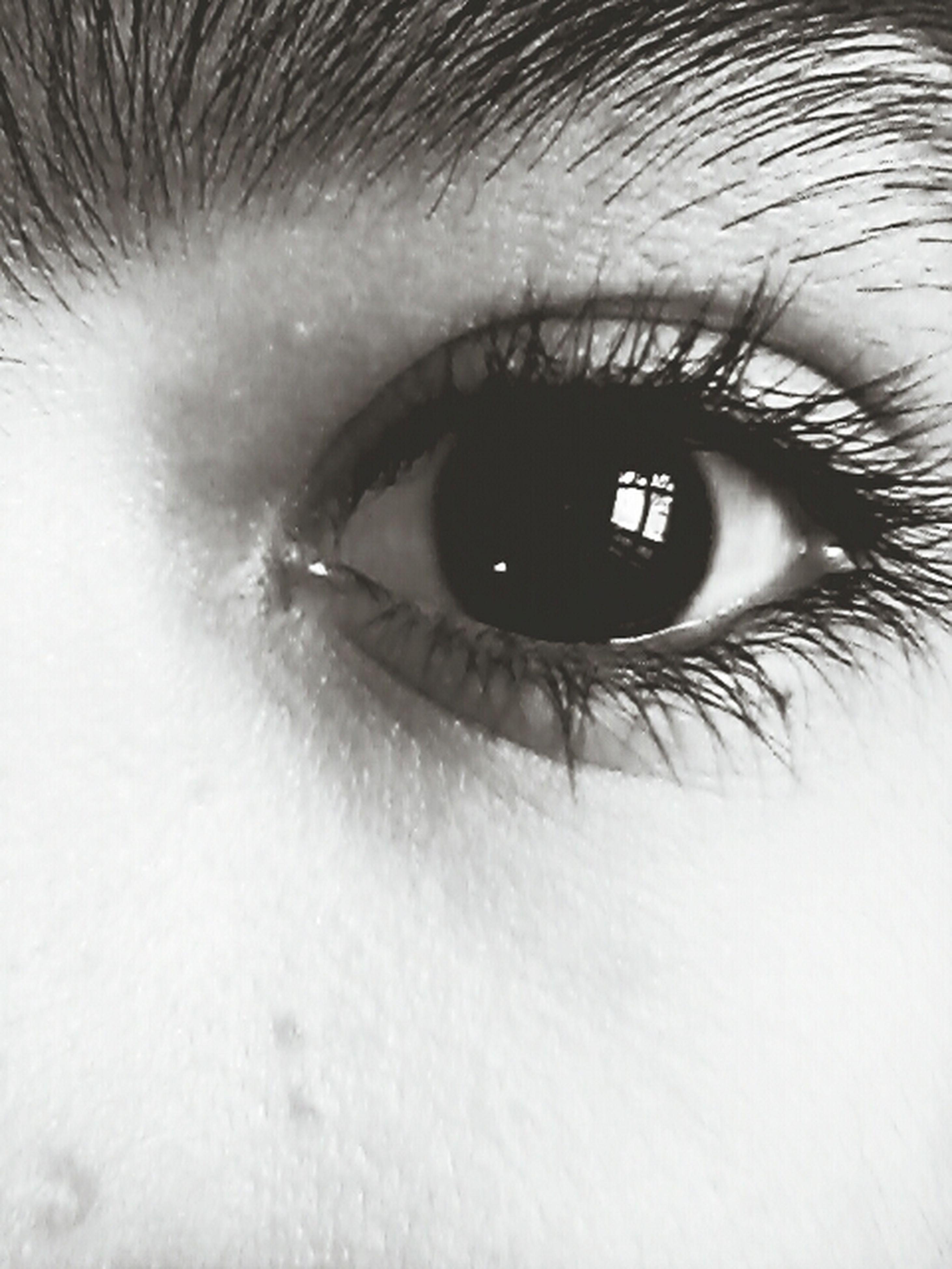 human eye, eyelash, eyesight, close-up, sensory perception, part of, eyeball, looking at camera, extreme close-up, iris - eye, portrait, human skin, human face, extreme close up, unrecognizable person, person, lifestyles