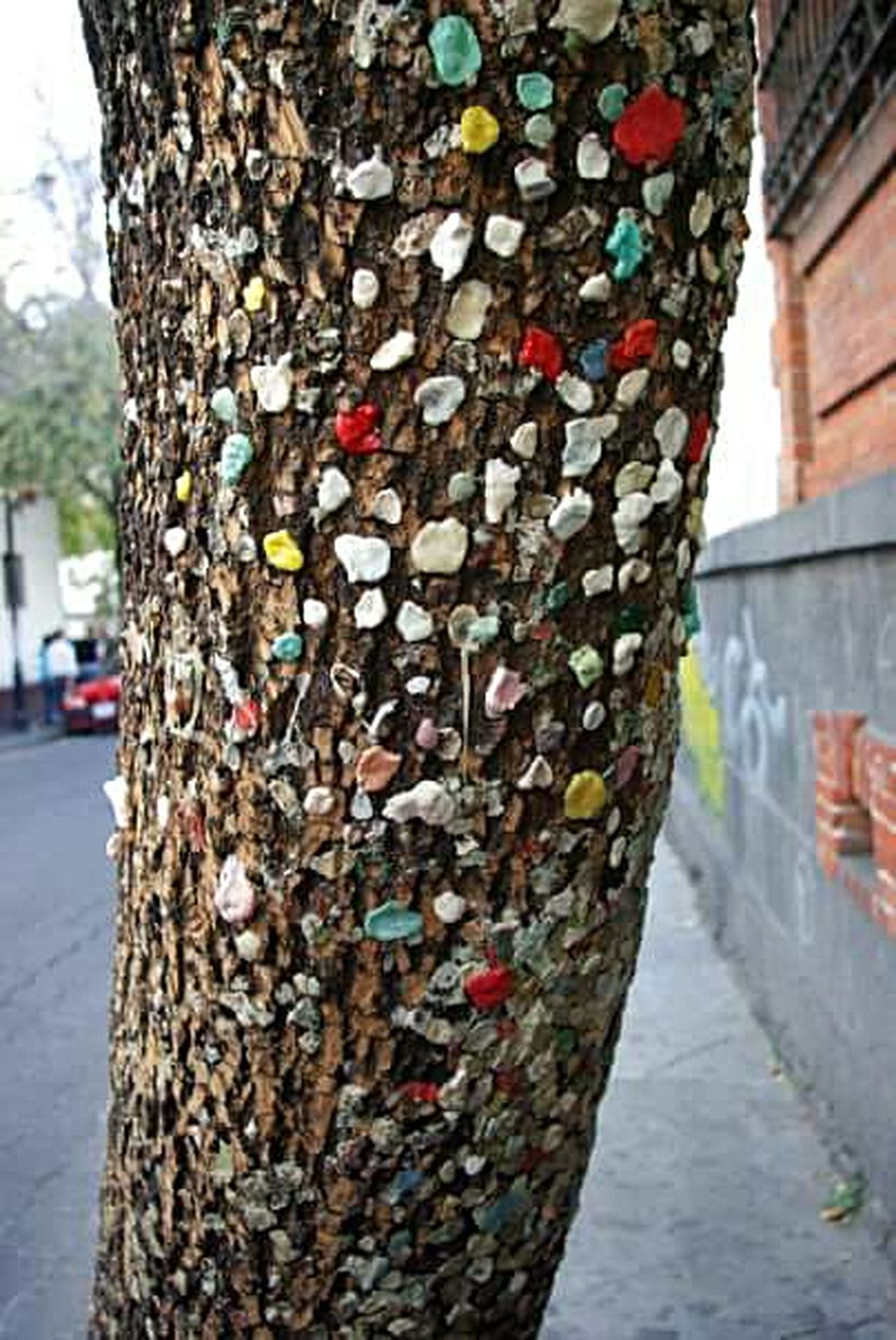 Coyoacán, CDMX 2008 Focus On Foreground Multi Colored Tree No People Nature Day Gum Gross Tradition Cdmx Coyoacán Mexico
