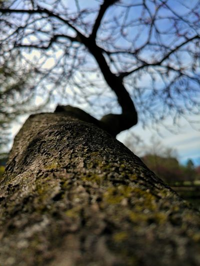 Beauty In Nature Branch Close-up Day Growth Low Angle View Nature No People Outdoors Sky Tree Tree Trunk