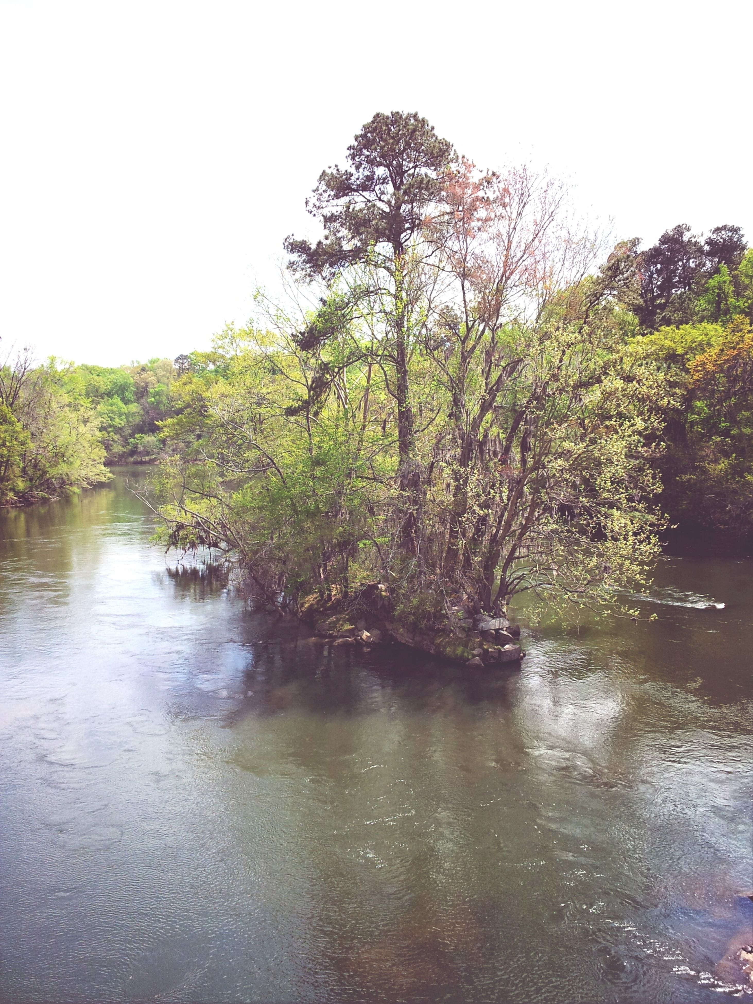 tree, water, tranquility, tranquil scene, clear sky, reflection, waterfront, scenics, beauty in nature, lake, nature, growth, river, green color, idyllic, forest, day, outdoors, sky, non-urban scene