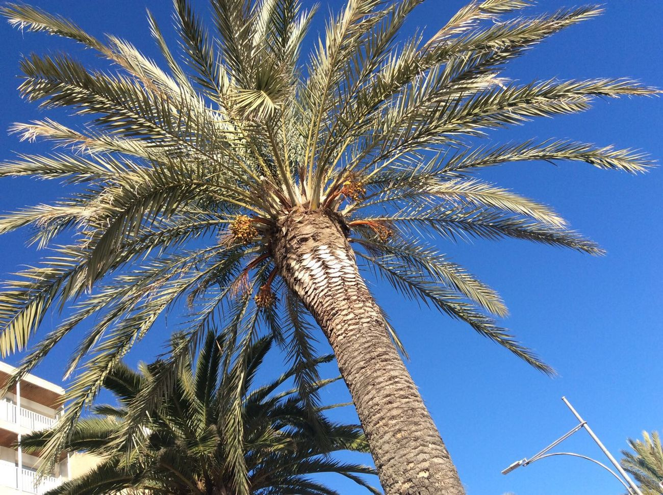 Photography Iphonephotography IPhoneography Palmtrees Spain2015🇪🇸 Barça Barcelona Holiday Holiday2015