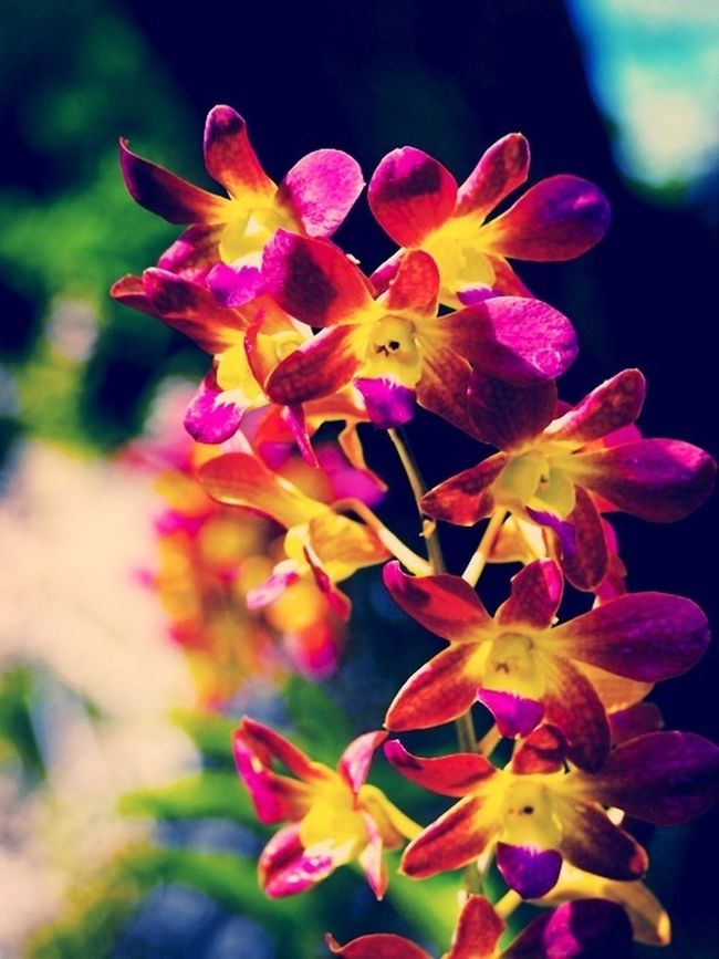 Flowers Flower Porn
