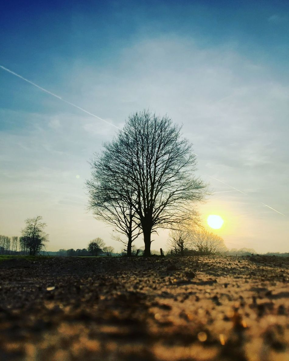 Sunset behind the lonely tree Tree Nature Sky Tranquil Scene Tranquility Bare Tree Scenics Field Beauty In Nature No People Outdoors Landscape Day