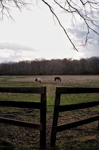 Posted Agriculture Farm Rural Scene Landscape Tree Sky Tranquility Growth Field Nature Bare Tree Day Outdoors No People Tractor Tanglewood Winston-Salem North Carolina Northcarolina