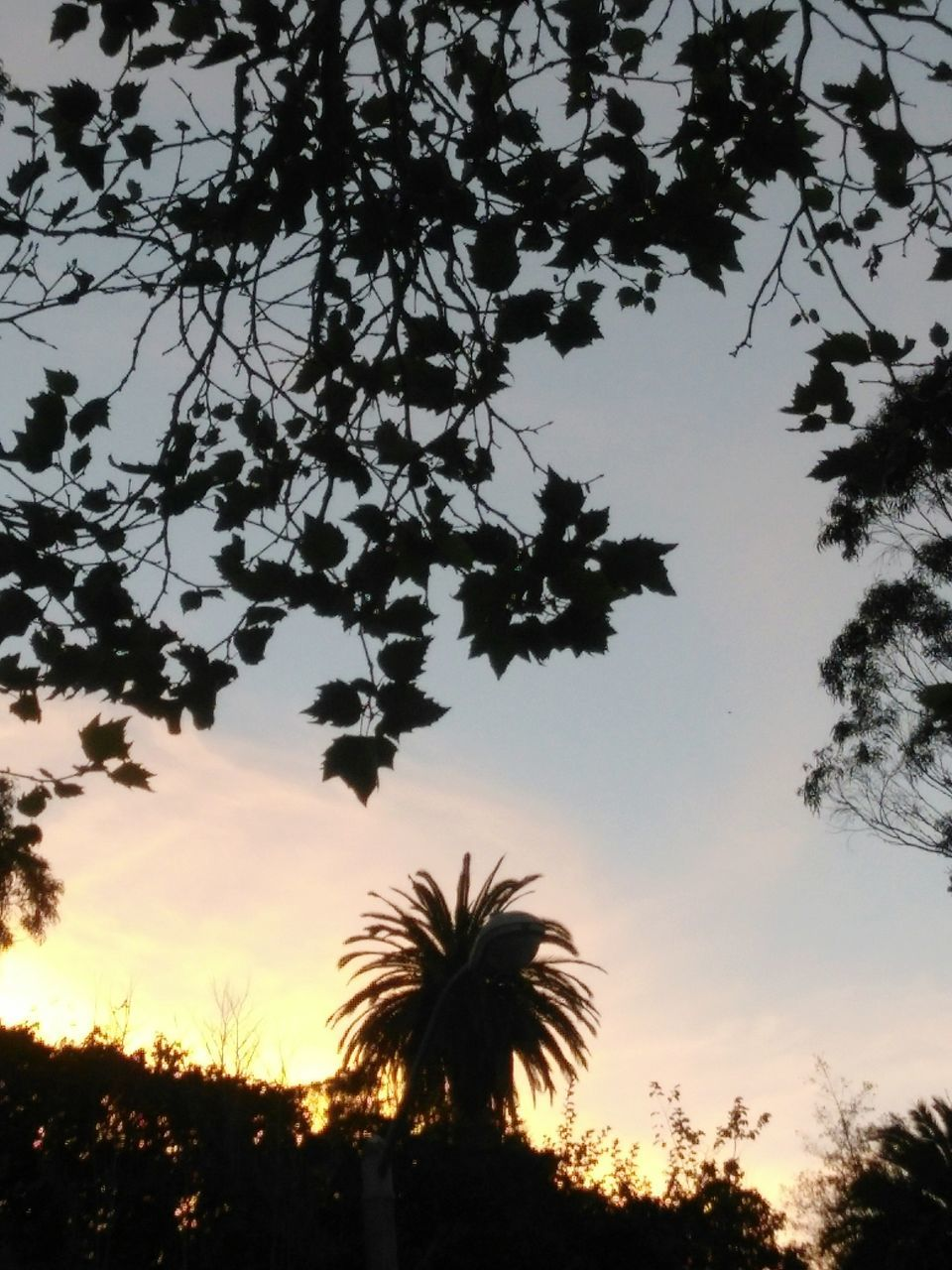 tree, palm tree, silhouette, sunset, sky, low angle view, beauty in nature, growth, nature, outdoors, tranquility, no people, scenics, tree trunk, day